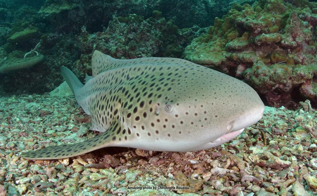 Hin Bida. Koh Bida. Diving Koh Lanta. Buceo Koh Lanta. Hidden Depths Diving