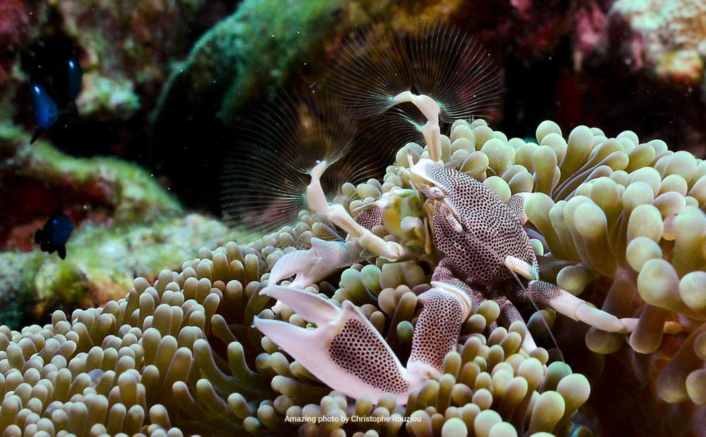Bida Nai. Koh Bida. Diving Koh Lanta. Buceo Koh Lanta. Hidden Depths Diving