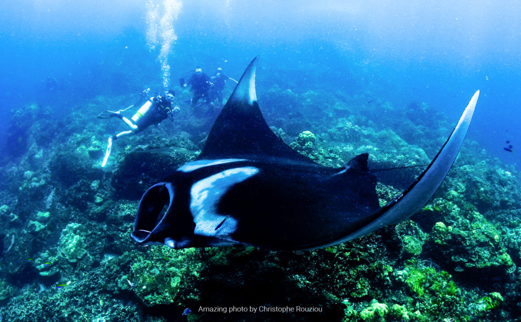 Hin Daeng. Hin Muang. Diving Koh lanta. Buceo Koh Lanta. Hidden Depths Diving