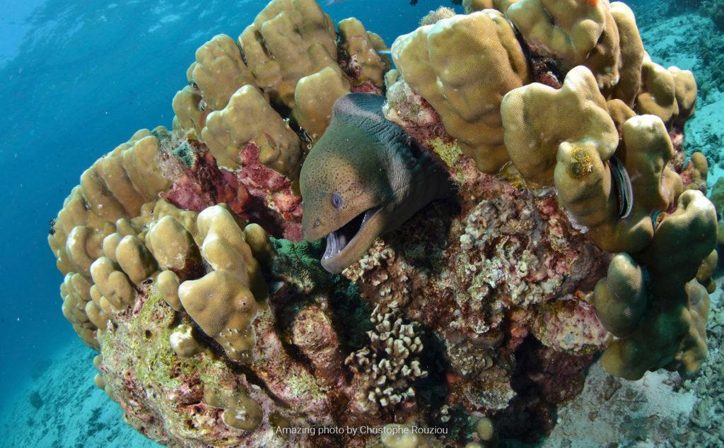 Koh Haa. Diving Koh lanta. Buceo Koh Lanta. Hidden Depths Diving